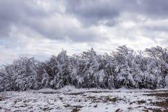 Saga för snö för träd för vinter kall med is fryst vit Royaltyfri Bild