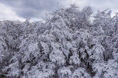 Saga för snö för träd för vinter kall med is fryst vit Royaltyfri Foto