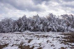 Saga för snö för träd för vinter kall med is fryst vit Royaltyfri Fotografi