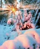 Saga för vinter` s Royaltyfria Foton