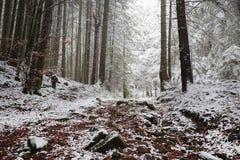 Saga som skog med snö som täcker höstsidorna Arkivfoto