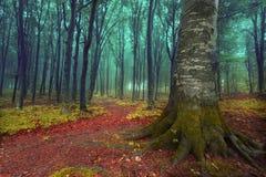 Sagafärger av den dimmiga skogen Royaltyfri Fotografi