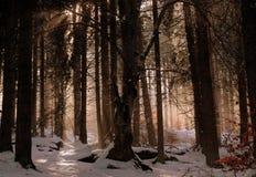 Sagan av skogen royaltyfri foto