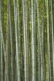 Sagano Bamboo Forest Japan. Sagano Bamboo Forest also called Arashiyama Bamboo Grove in Arashiyama. Kyoto, Japan Stock Photo