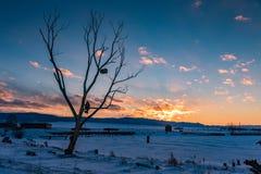 Sagasjöjungfru som sitter på ett träd, var en bröstkorg hänger och en katt bevakar dem i vintern på solnedgången, Altai, Ryssland arkivfoton