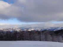 Sagaskog, snöig sikt royaltyfri bild