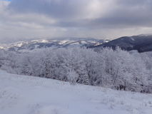 Sagaskog, snöig sikt, landskapet i bergen royaltyfri bild