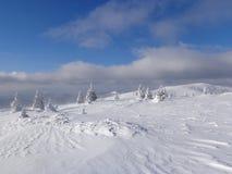 Sagaskog, snöig sikt, landskapet i bergen royaltyfri fotografi