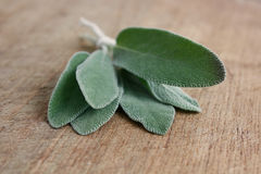 Sage. On a wooden background royalty free stock photos