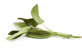 Sage. Leaves over white background stock image