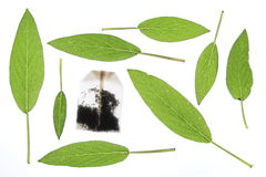 Sage. Leaves with a tea bag Royalty Free Stock Image