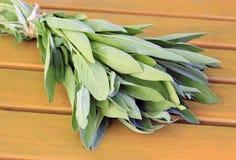 Sage. Fresh sage twigs bundled to dry - Salvia officinalis Stock Photo