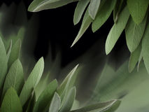 Sage background Royalty Free Stock Photo