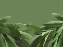 Sage background Royalty Free Stock Photography