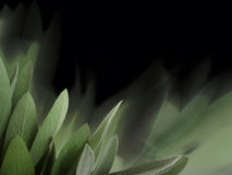 Sage background Stock Photos