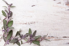 Sage background. Sage herb on white wooden background with copy space. Alternative herbal medicine royalty free stock images
