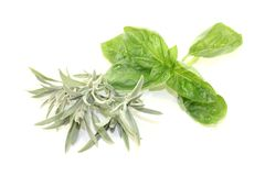 Sage and basil Royalty Free Stock Images