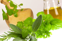 Sage,Basil,Parsley and Mint,isolated on white Royalty Free Stock Image