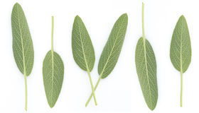 Sage Benefits Anti-inflammatory, Antiseptic and antibacterial, R Stock Photo