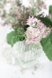 Sage bouquet Royalty Free Stock Photos