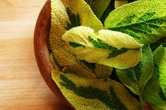 Sage bowl. Sage leaves in a wooden bowl royalty free stock image
