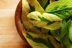 Sage bowl Royalty Free Stock Image