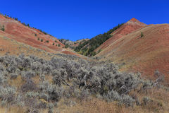 Sage Brush en collines rouges, Kelly WY Photographie stock