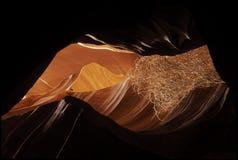 Sage brush in slot canyon. Sage brush caught in slot canyon Royalty Free Stock Photos