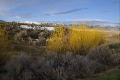 Sage Brush and Willows. In Arbon Valley, Idaho Royalty Free Stock Image