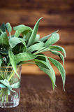 Sage bunch in glass with  ribbon on rural wooden background Royalty Free Stock Photography