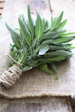 Sage bundle. Spice on table Stock Image