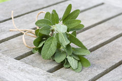 Sage of bundle close-up Royalty Free Stock Image