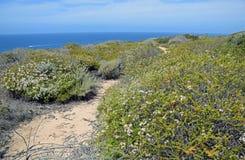 Sage Community litoral na área de Dana Point Headlands Conservation fotografia de stock
