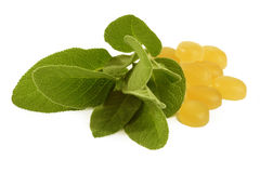 Sage cough drops Stock Photography
