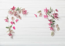 Sage decorative on white background. Sage decorative on white wooden background royalty free stock photo