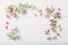 Sage decorative on wooden background. Sage decorative on white wooden background royalty free stock image