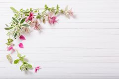 Sage decorative on white wooden background. The sage decorative on white wooden background stock photos