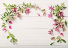 Sage decorative on white wooden background. The sage decorative on white wooden background royalty free stock images