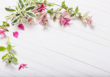 Sage decorative on white wooden background. The sage decorative on white wooden background stock photo