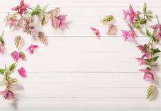 Sage decorative on wooden background. Sage decorative on white wooden background royalty free stock photos