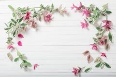 Sage decorative on wooden background. Sage decorative on white wooden background stock images