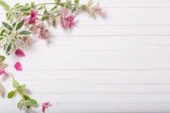 Sage decorative on wooden background. Sage decorative on white wooden background stock photos