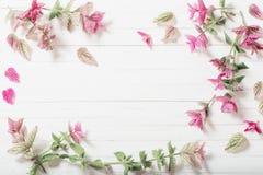 Sage decorative on wooden background. Sage decorative on white wooden background royalty free stock images