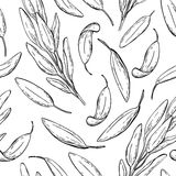 Sage  drawing seamless pattern. Isolated sage plant with l Stock Photography