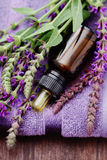 Sage essential oil Royalty Free Stock Images