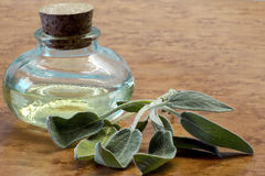 Sage essential oil Stock Images