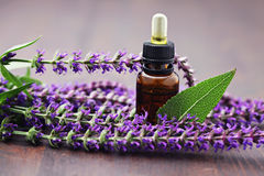 Sage essential oil Royalty Free Stock Image