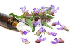 Sage essential oil. Sage plant and essential oil on pure white background stock photography