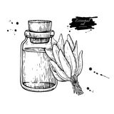 Sage essential oil bottle and sage leaves hand drawn vector illustration. Isolated plant drawing for Aromatherapy Royalty Free Stock Image