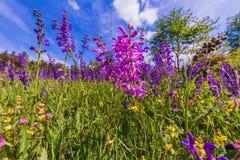 Sage Flower Meadow Fotografía de archivo
